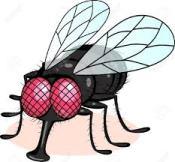 flies lies african